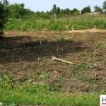 Mulczowanie terenu Gniezno_rozdrabnianie drzew_Hermar Gniezno_7